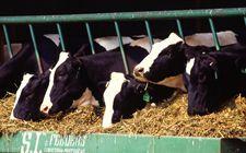 <b>上海金山区创新引进移动智慧畜牧监管服务平台 提升畜牧监管能力</b>