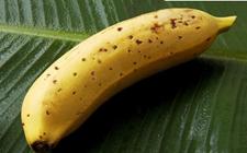 """香蕉连皮一起吃?日本科学家解决一""""世界难题"""""""