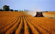 美国农业部或调高全球大豆期末库存