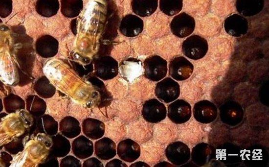 蜜蜂常见疾病该如何防治?蜜蜂常见疾病的防治方法