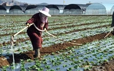陕西:开展改革试点建立四项机制 农业水价综合改革获认可