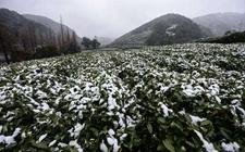 南京普降暴雪成立工作组赴受灾现场助农防灾减灾