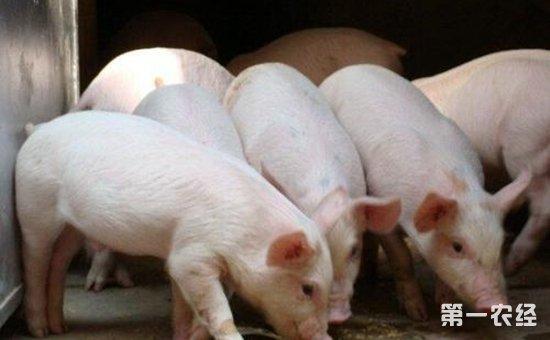 科学饲养育肥猪的环境要素是什么?