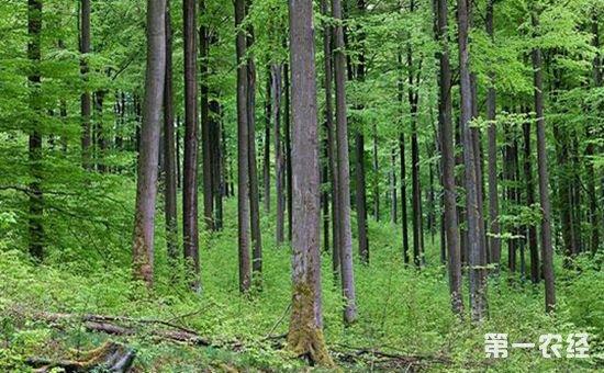 2017年全国林业产业总值首次突破7万亿元