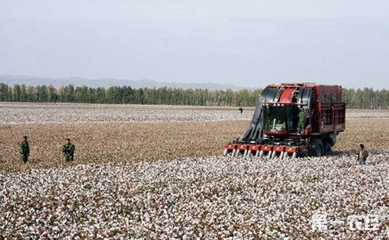 共建黄河流域棉花生产全程机械化基地签约仪式在山东滨州市举行
