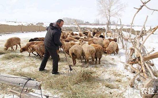 冬季寒冷风雪灾害下,如何做好畜牧养殖应急措施?