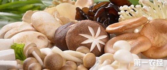 2018年1月5日全国海鲜菇、蘑菇、杏鲍菇价格