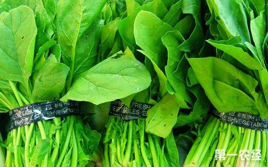 2018年1月5日全国各地菠菜价格