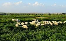 """河南:引导农户实施""""三进三退"""" 发展绿色养殖"""