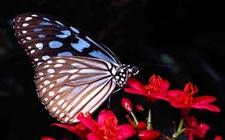 蝴蝶的天敌是什么动物?蝴蝶的天敌有哪些?