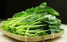 菠菜如何留种?菠菜留种技术要领