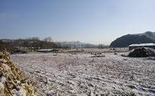 中东部雨雪天气有利于冬麦区土壤补墒 总体对农业生产有利