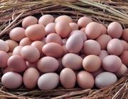 鸡蛋价格继续上涨 清理存储保障市场货物通畅