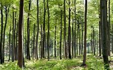 湖北:拟推行林业综合行政执法体制 保持涉林违法犯罪的高压态势