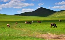 内蒙古:有效展开困难群众救助工作 下达超过43亿救助补助资金