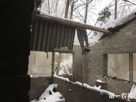 湖北谷城遭特大暴雪袭击 畜牧业损失511.81万元