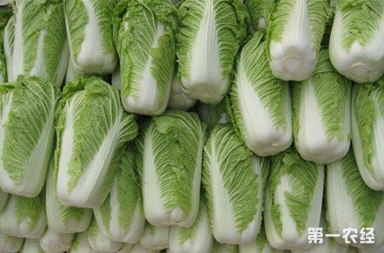 2018年1月8日全国各种白菜价格行情