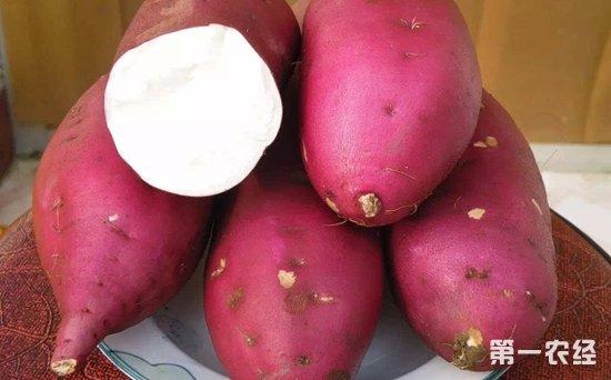 2018年1月8日全国红薯价格行情