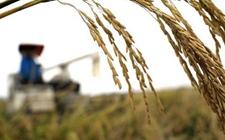 <b>推进农业废弃物资源化利用 走好乡村绿色发展之路</b>