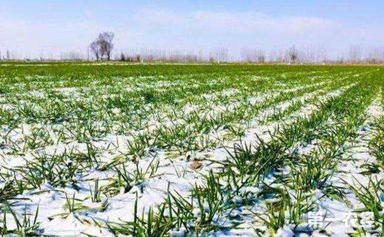 农业部:低温雨雪天气多发  全力保障农业生产安全
