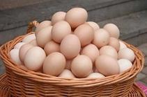 肉鸡价格回升鸡蛋稳中上涨淘汰鸡价格偏弱