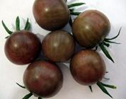 黑番茄如何种植?黑番茄的种植技术