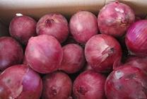 红皮洋葱怎么种植才能高产?红皮洋葱高产种植的方法