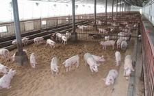 怎样的地理环境适合进行养猪场建设?