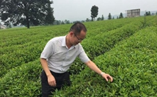 <b>全国农业劳动模范周宇:勇于创新的茶农致富领路人</b>