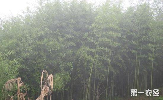 江西省出台《关于加快林下经济发展的行动计划》 推进林业发展