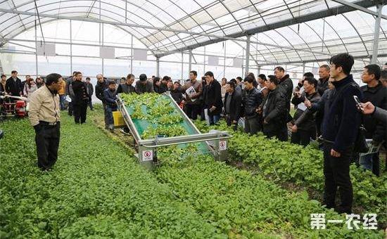 黑龙江出台《蔬菜生产机械化技术及机械汇编》 蔬菜生产机械化取得突破