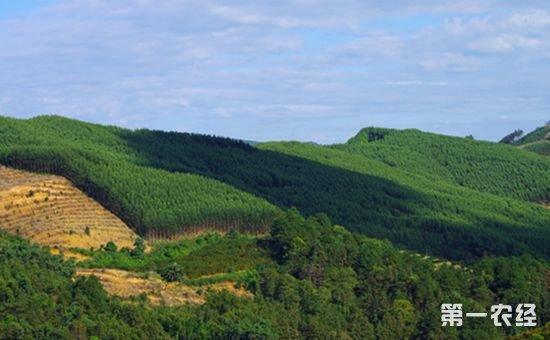 我国将启动大规模国土绿化行动 力争2018年完成造林1亿亩以上
