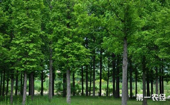 湖北省拟全面推行以森林公安为主体的林业综合行政执法体制
