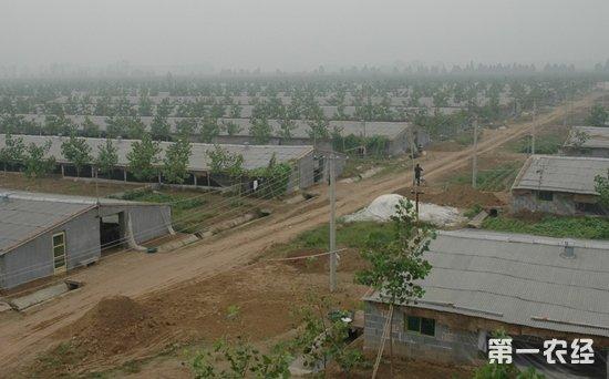 """广东畜牧业为""""变粪为宝""""将转移至山区"""