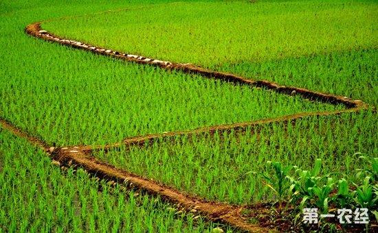 以满足市场需求为导向  调整优化农业结构