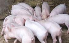 2018年1月10日生猪价格行情继续保持上涨