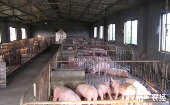 现代化养猪场建设选址要遵循哪些原则?