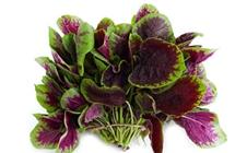 苋菜如何反季节种植?苋菜反季节高产施肥技术