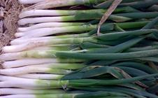 什么是大葱蛴螬?大葱蛴螬的防治措施