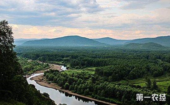 内蒙古五年累计营造林5774万亩 完成重点区域绿化面积1037万亩