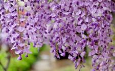 世界上花语最悲伤的前十名花,向日葵居然在列!