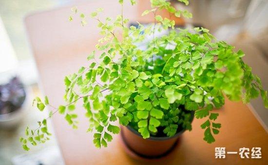 8种常见盆栽植物的养护方法介绍!叶绿青翠净化空气