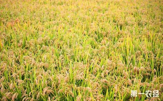 坚持农业农村优先发展 把握乡村振兴战略的六