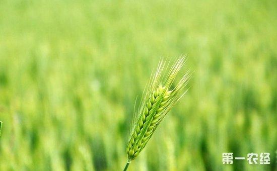 坚持农业农村优先发展  把握乡村振兴战略的六大新内涵