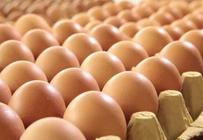 雨雪天效果仍在鸡蛋价格稳中小幅上涨