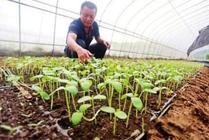 无公害蔬菜生产中如何使用农药
