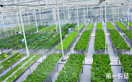 长子县:创建蔬菜绿色高产高效部级示范区