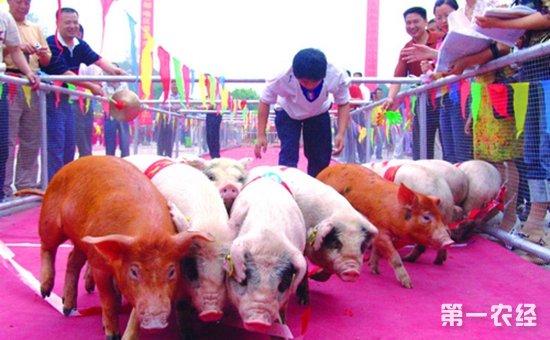 重庆即将举办的第十届荣昌年猪节活动纷呈