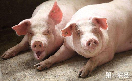 天气因素影响减弱生猪价格走势或迎来调整