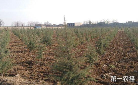 昆明出现严重霜冻 部分树种受灾严重